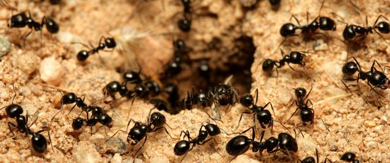 Bug Crawling Sensation On Scalp